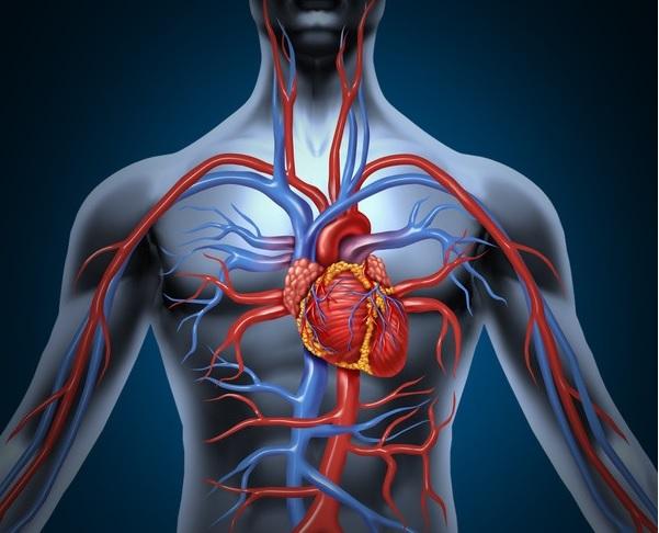 peripheral vascular